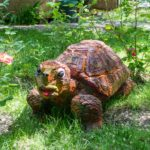 Наша черепаха.